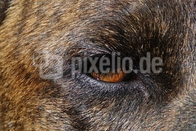Aldos Auge