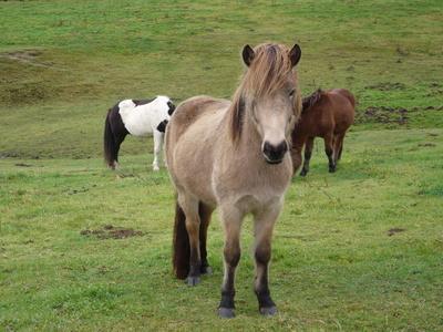 Klasse  Pferde