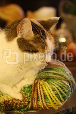 Katze kuschelt auf der Wolle
