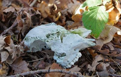Knochenfund im Wald 2