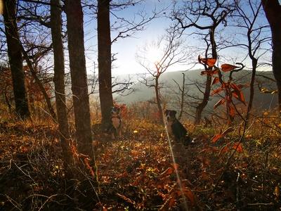 Herbststimmung Schwäbische Alb