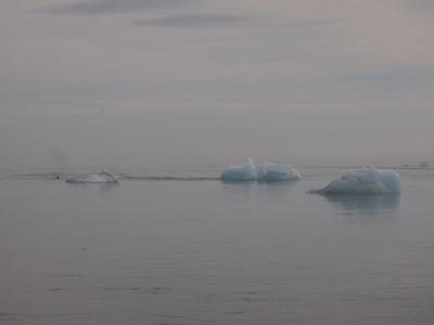 Eisberge an der Küste Islands
