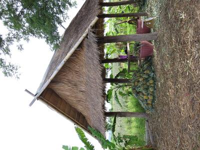 Ananas-Plantage in Thailand