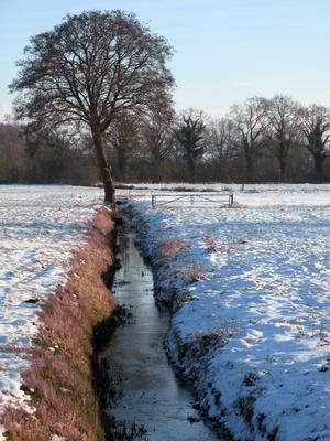 Winterbaum am Graben