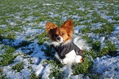 Philomena im Schnee