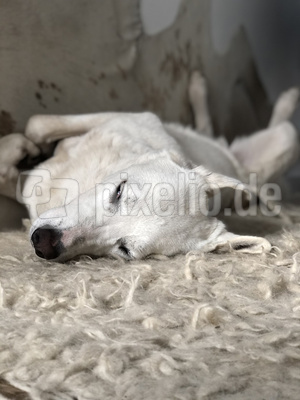 hund mix verdreht