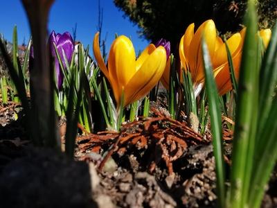 Schönheit im Frühling
