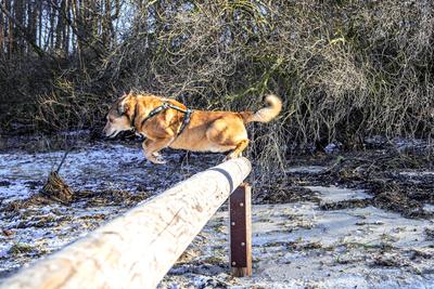 Hund beim Freizeitsport