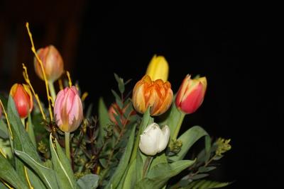 Bunter Tulpenstrauß