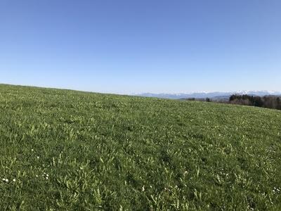 Saftig grüne Wiesen, strahlend blauer Himmel im Allgäu