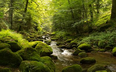 grünes Tal