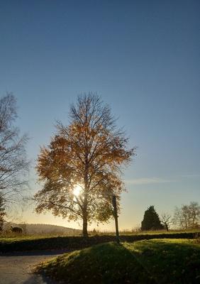 Herbst auf dem Michaelsberg