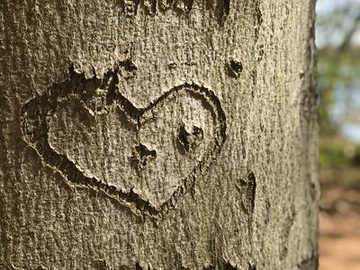 Geschnitztes Herz in Baumrinde
