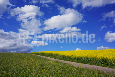 Rapsfeld gegen Wolkenhimmel