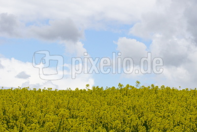Frühlingsflagge
