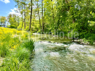 Frühling an der renaturierten Waldach