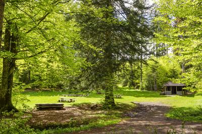 Rastplatz im Frühlings-Wald