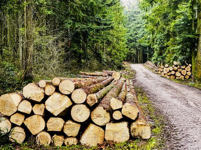 Holzernte im Wald