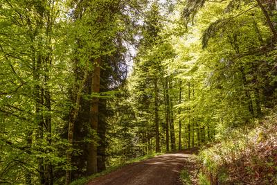 Wanderweg im Zinsbachtal