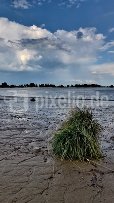 Ufergrün an der Weser