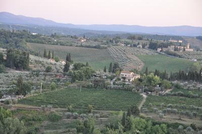 weite Landschaft in Italien mit Olivenhainen