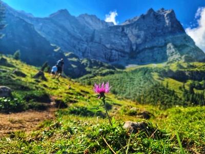 Blume vor Panorama