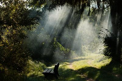 morgens im Wald